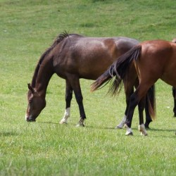 Graszaad paardenweidemengsel Horsemax (10 kg.)