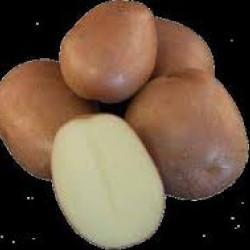 Pootaardappels Monte Carlo (28/35) prijs per kg