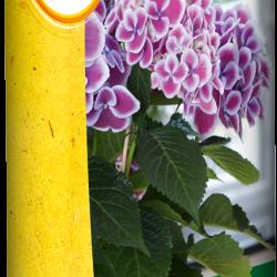 SBM Solabiol Pyrethrum spray Natria (400 ml.)