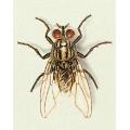 Vliegende en kruipende insecten