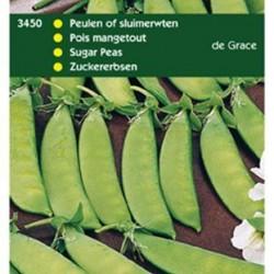 Peulen De Grace 70/80 cm