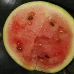Watermeloen Sugar Baby (Biologisch)