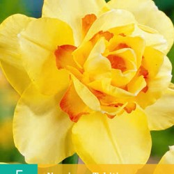 Narcis Tahiti (5 st.)