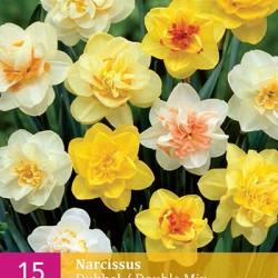 Narcis Dubbel Mix (15 st.)