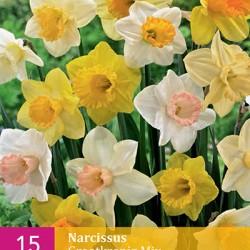 Narcis Grootkronig Mix (15 st.)