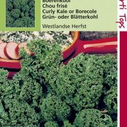 Boerenkool Westlandse Herfst, laat type