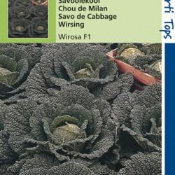 Savoyekool Wirosa/Midvoy F1