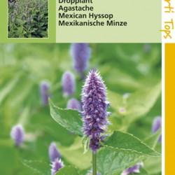 Agastache / Dropplant