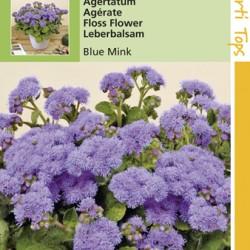 Ageratum/Bleu Mink