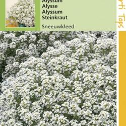 Alyssum / Sneeuwkleed