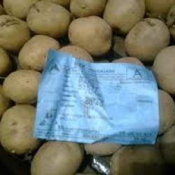 Pootaardappels Ottena (28/35) prijs per kg