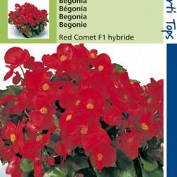 Begonia F1 hybride / Komeet scharlakenrood