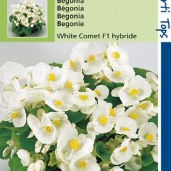 Begonia / Witte komeet F1 hybride
