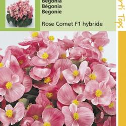 Begonia F1 hybride / Komeet helderrose