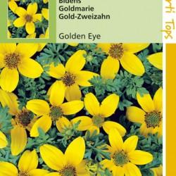 Bidens Humilis / Golden Eye
