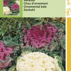 Brassica Sierkool / Vele soorten