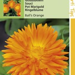 Calendula / Goudsbloem Ball's orange