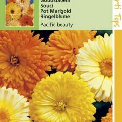 Calendula / Goudsbloem Pacific Beauty