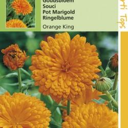 Calendula / Oranjekoning donkerhart