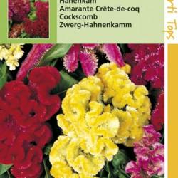 Celosia / Hanekam gemengde kleuren
