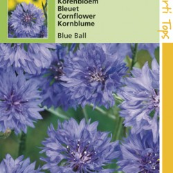 Centaurea / Korenbloem Blue Ball