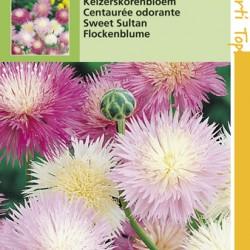 Centaurea / Keizerkorenbloem