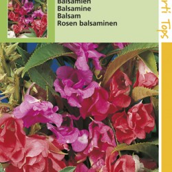 Balsamina / Camelliabloemig
