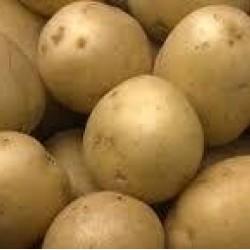 Pootaardappels Sante (28/35) prijs per kg
