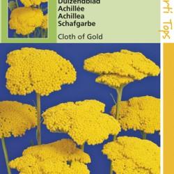 Achillea / Geel Duizendblad Cloth of Gold