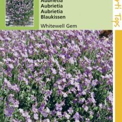 Aubrieta / Whitewell gemengd