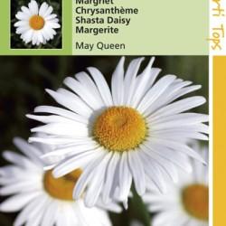 Chrysanthemum / Margriet, Meikoningin