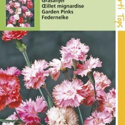 Dianthus / Grasanjer, dubbele
