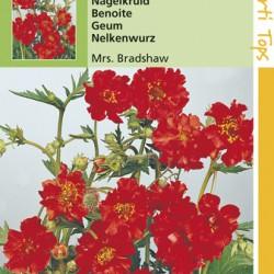 Geum / Nagelkruid Mrs. Bradshaw