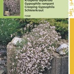 Gypsophila / Gipskruid kruipend