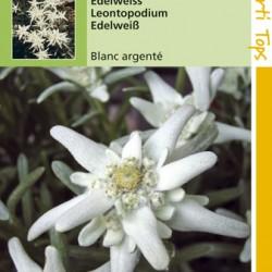 Leontopodium / Edelweiss