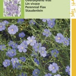 Linium / Vlas rijkbloeiend blauw