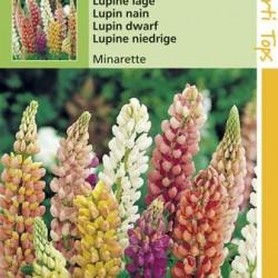 Lupinus / Lupinen Minarette