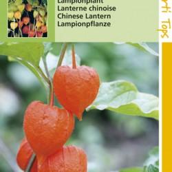 Physalis / Lampionplant