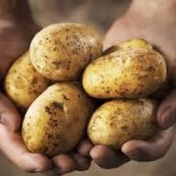 Pootaardappels Lekkerlander (28/40) prijs per kg