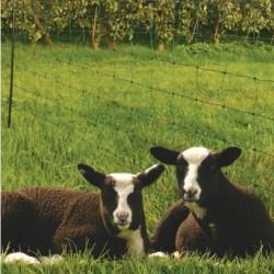 Koltec schapennet 84 cm. groen 50 meter