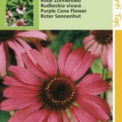 Echinacea / Zonnehoed purperrood