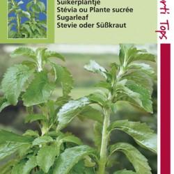 Stevia / suikerplantje