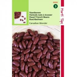 Stamslabonen Kidney beans