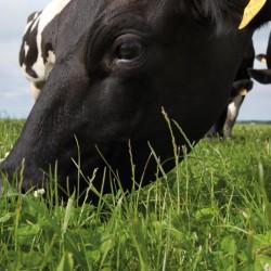 ForageMax weidemengsel MilkMax Tetra (15 kg.)