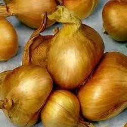 Sjalotten Golden Gourmet (250 gr)