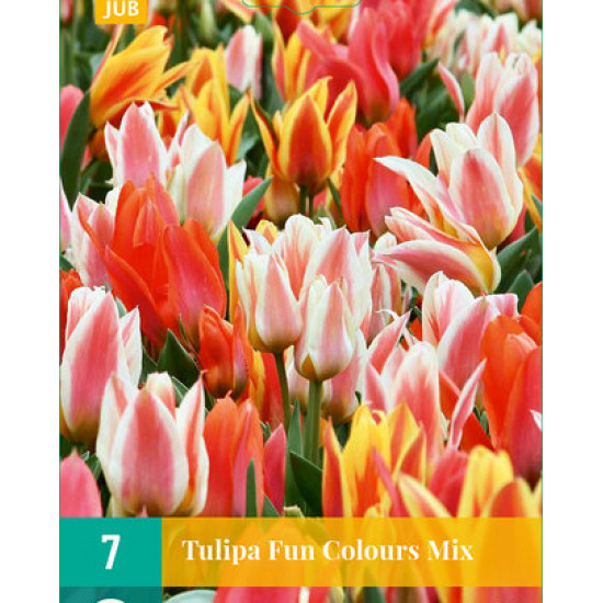 Tulp Fun Colours (7 st.)