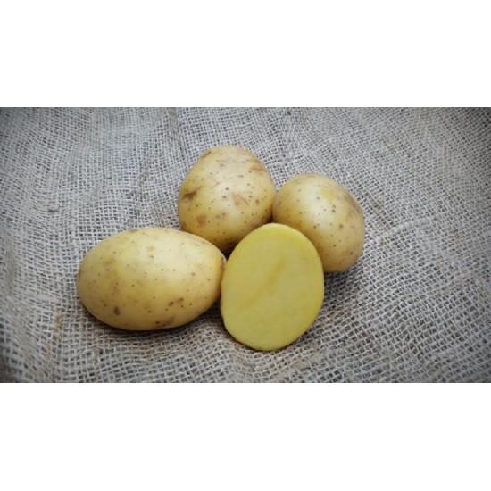 Pootaardappels Vitabella 28/35 Biologisch