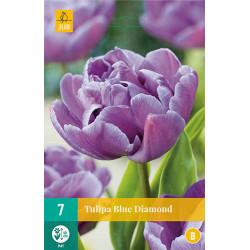 Tulp Blue Diamond (7 st.)