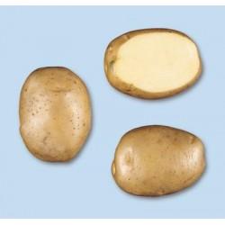 Pootaardappels Frieslander (40/55) Biologisch prijs per kg (niet leverbaar in 2020)